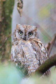 owl by Bastian Bodyl on 500px