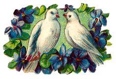 dove-flower-frame-image-romantic-clipart-vintage.jpg (JPEG-kuva, 1600×1090 kuvapistettä) - Pienennetty (60 % alkuperäisestä)