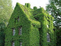 House covered in vines.