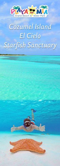 Top notch Things to do in Cozumel Island EL Cielo Isla Cozumel Quintana Roo México #Travel #IslaCozumel #Snorkel #ViajemosTodosPorMéxico #ElCieloCozumel