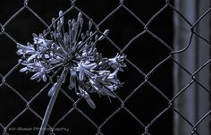 Set me free - Flower through the wire