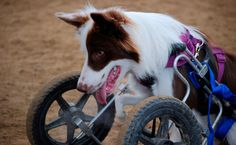 Celebrate Differences on National Specially-Abled Pets Day - http://nifyhealth.com/celebrate-differences-on-national-specially-abled-pets-day/