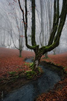 Misty Morning world nature Foto Nature, All Nature, Amazing Nature, Beautiful World, Beautiful Images, Trees Beautiful, Jolie Photo, Wonders Of The World, Enchanted