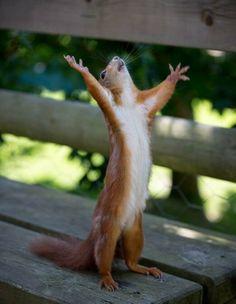 Hallelujah Friday!