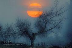 El árbol que sueña ser poema by xurxo