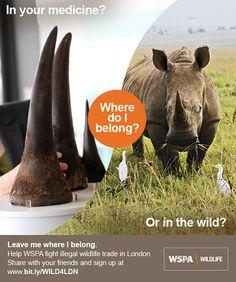 Support the WSPA's Cruelty in a Concrete Jungle campaign; http://www.wspa.org.uk