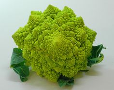 Nature is cool. Have you seen romanesco broccoli. Seriously, who came up with that?