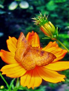 Butterfly @ Armazém Florestal garden