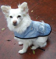 DIY Recycled Levi Denim Dog Coat