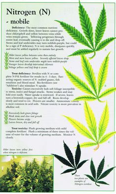 Cannabis Deficiency Guide | Marijuana Weed Problems Leafs Yellow Curling Guide