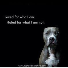 Breed awareness! Love pit bulls & it makes me sick to think how people treat them