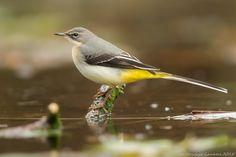 Vogels (Birds)(413 枚)