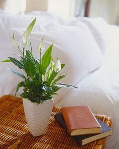 Indoor plants you cant kill. Peace lily (Spathiphyllum wallisii) There is a rea einblatt Best Indoor Plants, Cool Plants, Small Plants, Air Plants, Decoration Plante, Room With Plants, Low Maintenance Plants, Office Plants, Bedroom Plants