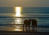 Let there be peace (photo: Corolla Wild Horse Fund)