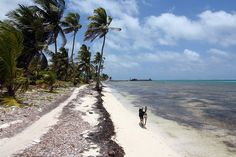Ambergris Caye ~ Belize - this is the exact Caye I'm going to in May.  <3  Happiness.