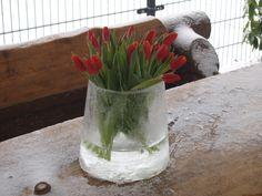Een IJsvaas met Tulpen een creatieve creatie van verstuureenbloemetje.nl    Benodigdheden:  IJskoud weer en een emmer water. Punt 1; Pak een emmer van ± 10 liter en vul deze met water. Houd deze emmer water gedurende 2 a 3 dagen in de gaten. Het water bevriest van buiten naar binnen. Punt 2; Als de randen dik genoeg zijn haal je de ijsvaas uit de emmer. Vul hem met een laagje water en zet er een leuk bloemetje in, bijvoorbeeld tulpen!     Een echt plaatje voor buiten zolang het nog vriest…