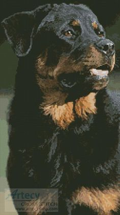 Rottweiler Photo Cross Stitch Pattern http://www.artecyshop.com/index.php?main_page=product_info&cPath=1_7&products_id=739