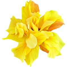 ldw_UnderPalmTree_flower-yellow2.png ❤ liked on Polyvore featuring flowers, filler, plants and yellow