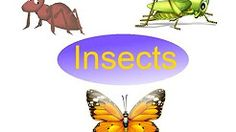 insects songs for preschoolers - YouTube