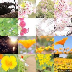 【disney0127】さんのInstagramをピンしています。 《. ꙳ ⢁ᐧ ᐧ . . 🌸2016年 spring happy Time🌸 📷#Canon 一眼レフ . . 今年は桜とチューリップ撮りに上野公園、代々木公園 ポピー撮りに昭和記念公園 一人で写真撮りに行くの楽しかったな~☺️💕 桜大好きだから来年も撮りに行きたい! 春は見渡せばピンクばかりで私の時期だから← 早く冬終わってまいりんTimeしたいところ🌸.*・゚ .゚ . . #2016 #春 #spring #桜 #ピンク #チューリップ  #ポピー #代々木公園 #上野公園 #昭和記念公園  #花 #カメラ女子 #一眼レフ #一眼レフ女子  #一眼レフ初心者 #1年3ヵ月目 🔰  #写真好きな人と繋がりたい  #写真撮ってる人と繋がりたい  #写真が好きな人と繋がりたい  #カメラ好きな人と繋がりたい  #カメラマンさんと繋がりたい . . 🌸2016春のお気に入りphotoでした🌸》