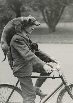 One man and his dogs out for a ride, ca. 1910s