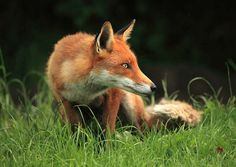 On the prowl by hantslad, via Flickr