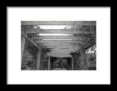 pergola,  flower, nature, black and white, michiale schneider, photography, interior design, framed art, wall art