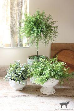 Indoor Vegetable Gardening, Organic Gardening, Container Gardening, Gardening Tips, Building A Raised Garden, Raised Garden Beds, Raised Beds, Faux Plants, Indoor Plants