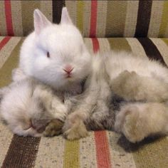 Little bunny says Hey Wake Up...It's Playtime!  ☺☺☺  ❤ http://smallpetselect.com/ ❤