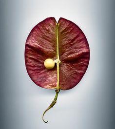 Scanned Seeds - Svjetlana Tepavcevic