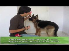 How to teach your dog to CLOSE DOORS! - YouTube