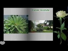 The Book Proshow Producer Photo Album My Garden. - YouTube