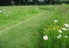 Wildflower Meadow- let it go