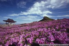 Mt. Hwangmaesan