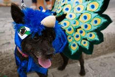 The annual 'Blocao' animal carnival in Rio de Janeiro, Brazil, sees owners parade their pets.