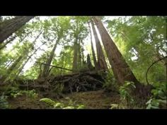 a wonderful clip about Gregory Bateson and what we do and do not perceive... ▶ An Ecology of Mind, The Gregory Bateson Documentary (1) - YouTube