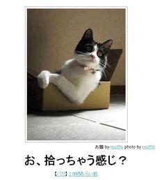 """""""highcampus:  ボケて(bokete): 【ボケ】お、拾っちゃう感じ?   """""""