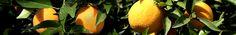 Edible Plants - UCCE Orange County Master Gardeners, CA