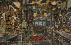 occult curio cabinet | Curiosity Shop #Seattle #Washington #Postcard #Vintage