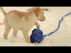 Dog Chow представляет самое активное поздравление с Новым Годом!   #BulldogPuppyFrenchie