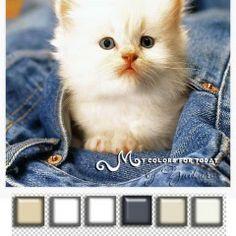 ImageShack - Animali 031.png