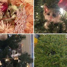 Новогодние котейки