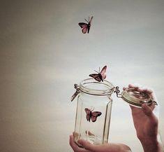 Butterflies in a jar