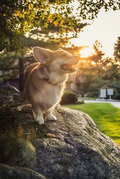"""Here comes the sun; here comes the sun, and I say it's all right, little darling..."" - John Lennon, Here Comes The Sun 