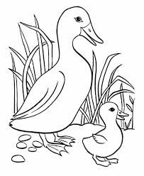 Afbeeldingsresultaat Voor Coloring Pages Ducks