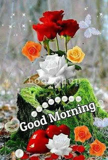 Good Morning My Sunshine, Good Morning Thursday, Good Morning Roses, Good Morning Cards, Cute Good Morning, Good Morning Greetings, Happy Sunday, Good Morning Flowers Pictures, Good Morning Beautiful Pictures