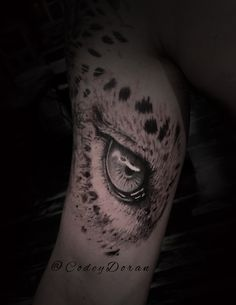 leopard eye by Codey Doran