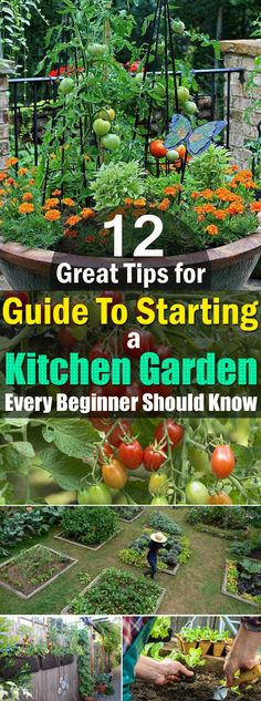 Check out the 12 best beginner tips, if you're starting a Kitchen Garden to grow your own flavorful fruits, aromatic herbs, and fresh vegetables!