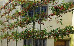 Gallery - Arne Maynard Garden Design