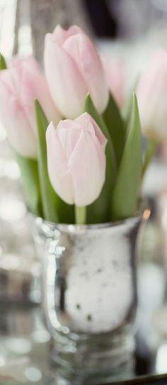 Blush Pink Tulips